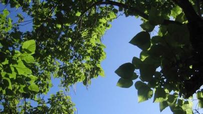 hojas-y-cielo-2.JPG