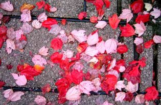 hojas-rojas.jpg