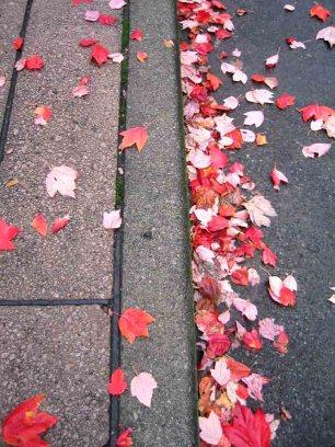 mas-hojas.jpg