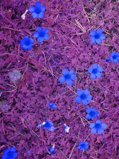 que decidimos mezclar con las flores coloridas de nuestro jardín