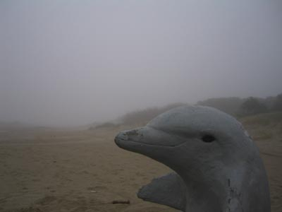 delfin-en-la-niebla.jpg