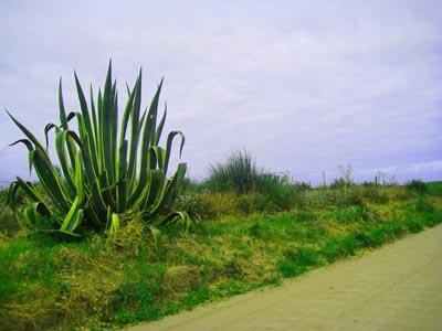 cactus_4282.jpg