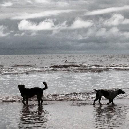 perros.2