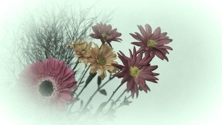 flores.P1000813