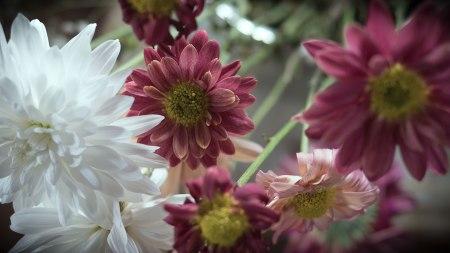 Flores.P1010045