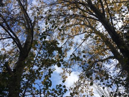 otoño.IMG_2355