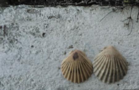 shells.2.P1070393