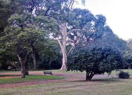 73-tronco-blanco-y-verdes