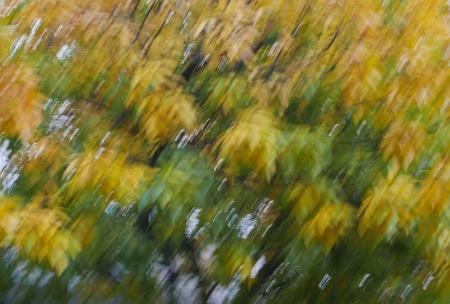 277.hojas de otoño lx