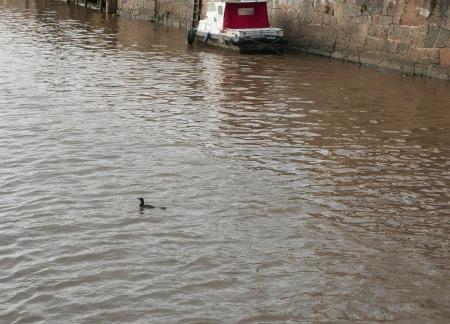 358.pato y barco 1