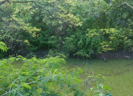 454.pantano y verdes