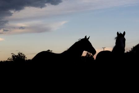 caballosalatardecer