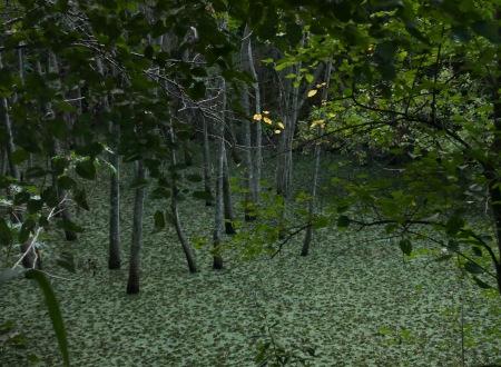 S60.pantano hojas amarillas