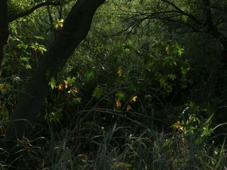 S61.reserva hojas brillos 10-2