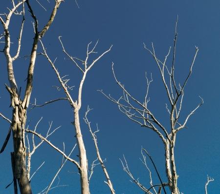 S63.arbol pelado cielo azul
