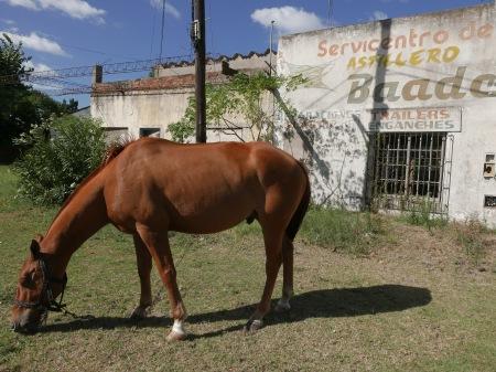 S93.caballo astillero