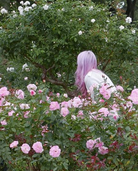 S159.rosedal pelo rosa 2