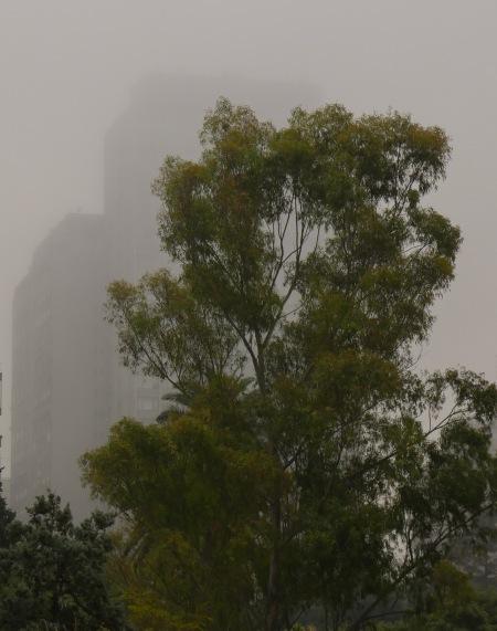 S201.LH niebla y arbol
