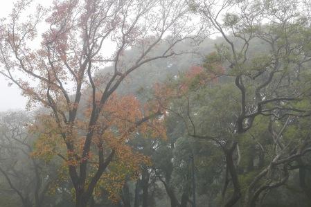 S203.psm arboles niebla