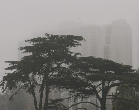 S206.arbol niebla sheraton