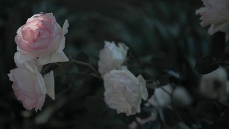 44.rosas.P1070725