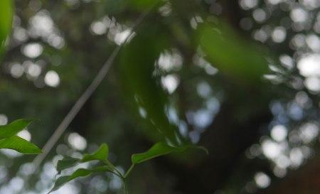 lucesdeljardin