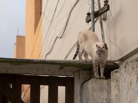 S457.gatito calle 25 1.jpg