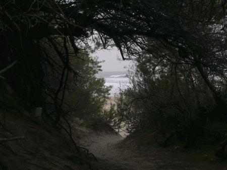S464.mar y medano