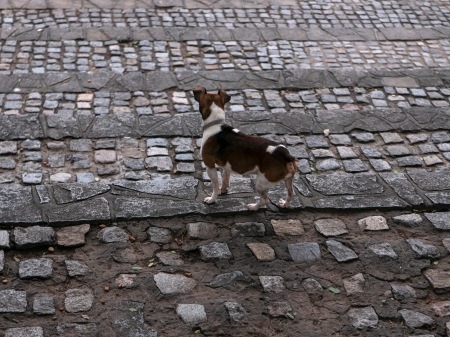 F94.perrito adoquines