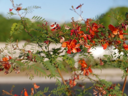 F212.flores veraniegas