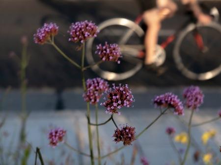 F213.flores y bici