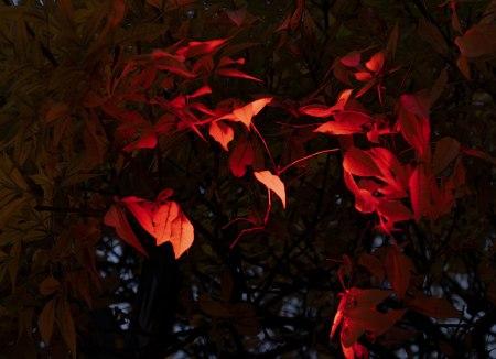 DC 50-hojas-rojas
