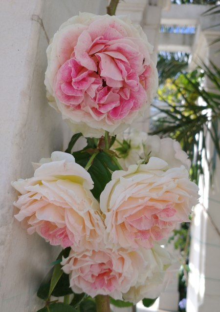 rosasnoviembre.bis