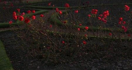 I33-ultimas-rosas-2