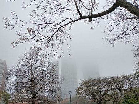 Niebla2021.parque.bis